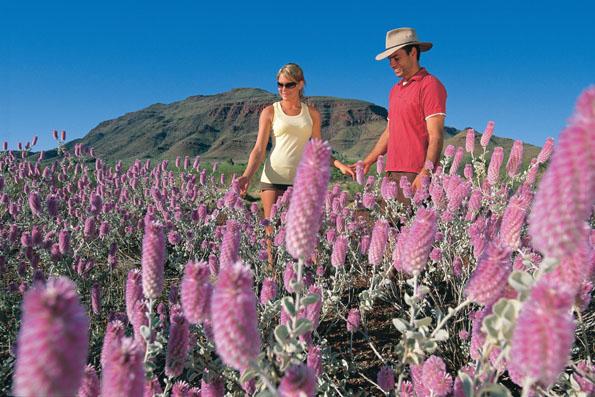Nicht nur wie hier unweit des Mount Bruce gedeiehen in Westaustralien Tausende von Wildpflanzen. (Foto Tourism Western Australia)