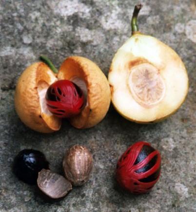 Der berühmteste Exportschlager aus Grenada: die Muskatnuss.