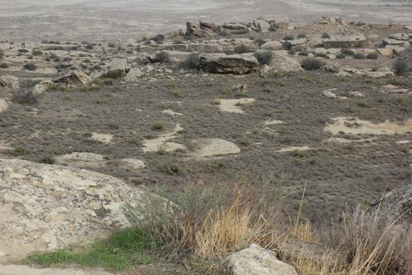 Viel wächst zwischen den Steinen und Geröllmassen rund um Gobustan nicht. (Foto Karsten-Thilo Raab)