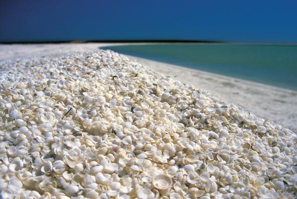 Fast 100 Kilometer lang und von Muscheln übersät: Der Shell Beach. (Foto Tourism Western Australia)