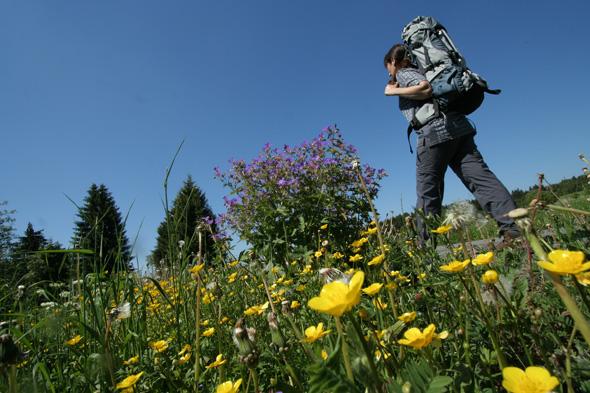 Sowohl von der Länge als auch vom Schwierigkeitsgrad sind die Wanderquickies für jedermann geeignet.