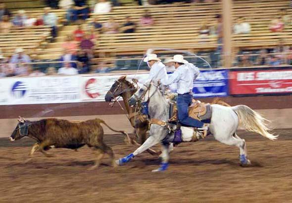 Fang das Rind - Cowboys beim Lassowerfen auf einem Rodeo in Colorado. ( Foto Matt Inden)