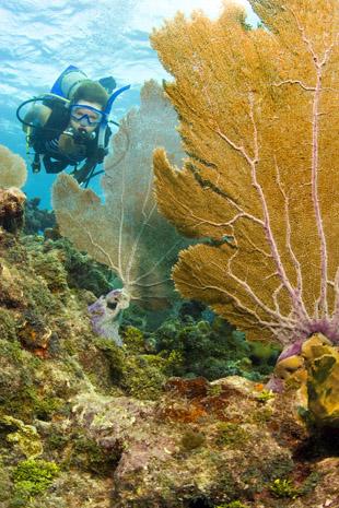 Die Unterwasserwelt bezaubert durch ein Kaleidoskop an bunten Fischen und Korallen. (Foto Bob Care)