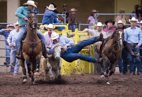 Mann gegen Rind - Cowboys beim Cattle Wrestling (Foto Matt Inden)