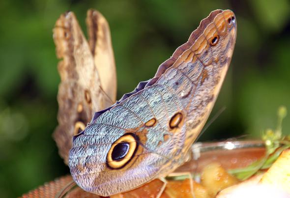 Rund 200 Schmetterlingsarten sind im Maximilianpark zuhause. (Foto Karsten-Thilo Raab)