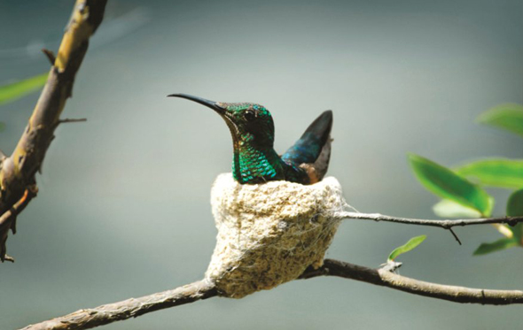 Die faszinierende Flora und Fauna sind die Pfunde, mit denen das südamerikanische Land wuchern kann. (Foto STS)