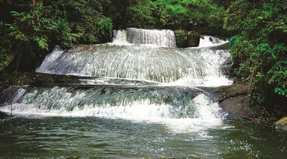 Vor allem Natirfreunde sind von der Vielfalt Surinames begeistert. (Foto STS)