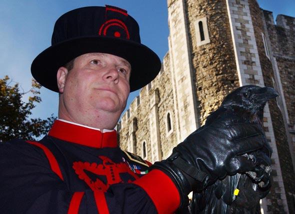 Solange Raben im Tower leben, so die Legende, wird das britische Königreich nicht fallen. (Foto HRP/Natasha Marie Brown)