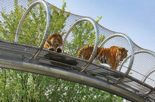 Im  Big Cat Crossing Trail  schauen Raubkatzen im wahrsten Sinne des Wortes in die Röhre - und auch dort hinaus. (Foto Philadelphia Zoo)