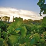Winzerkult im Wüstenstaat: Weinanbau in Arizona