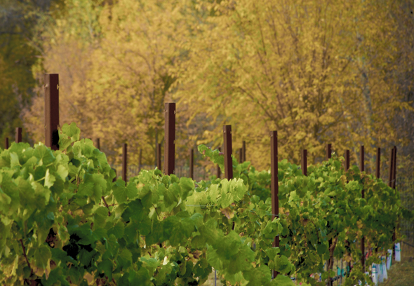 In mehr als 60 Weingütern wird mittlerweile in Arizona  gekeltert.