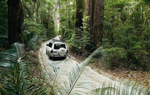 Auf Fraser Island geht es entlang von Sandpisten durch den Regenwald.