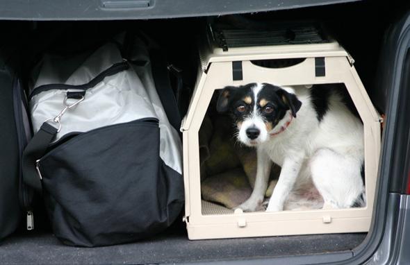 Zum Wohle des Tieres sollte darauf geachtet werden, dass der Hund genügend Platz beim Transport hat. (Foto Karsten-Thilo Raab)