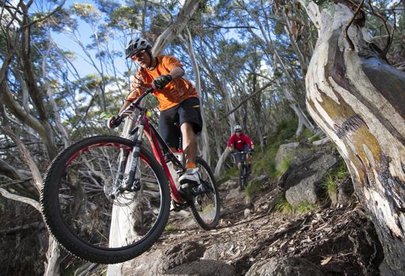 Auf Mountainbiker wartet rund um den Mount Buller mehr als 100 Kilometer Downhill-Vergnügen. (Foto Tourism Victoria)