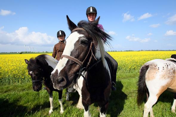 Auch auf dem Pferderücken lässt sich die Weite der Ostseeinsel erkunden. (Foto Thomas Nyfelder)