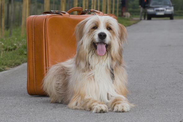 Tommy ist ein geübter Reisebegleiter und ist gerne mit Herrchen oder Frauchen auf Tour. (Foto: Andrea Klostermann)