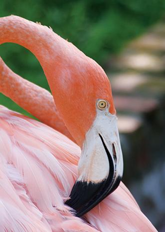 In den Jungle Gardens lassen sich nicht nur Flamingos aus nächster Nähe in Augenschein nehmen.