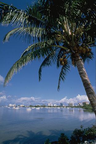 Palmen gesäumt ist die Bucht vor Sarasota.