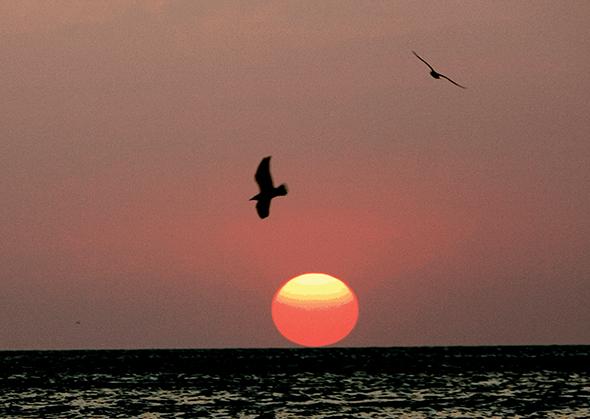 Bei Sonnenuntergang bietet der Siesta Key Beach fast schon kitschig schöne Fotomotive.
