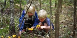 Natur ohne Grenzen: Schwedens Jedermannsrecht eröffnet ungeahnte Freiheiten