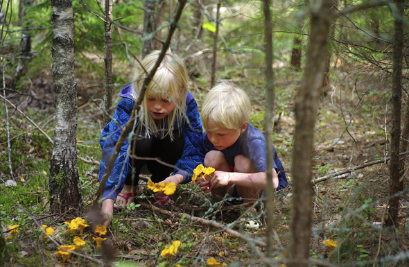 Das schwedische Jedermannsrecht gestattet weit mehr als das Sammeln von Pilzen. (Foto Johan Willner)