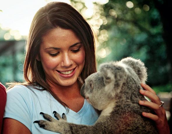 Im Lone Pine Sanctuary lässt sich sogar auf Kuschelkurs mit einem Koala gehen.