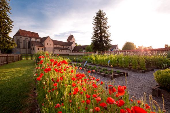 Auf der Insel Reichenau gibt es viele verschiedene Duft- und Heilpflanzen. Es wird zum Beispiel Basilikum, das nach Zimt duftet, angeboten.