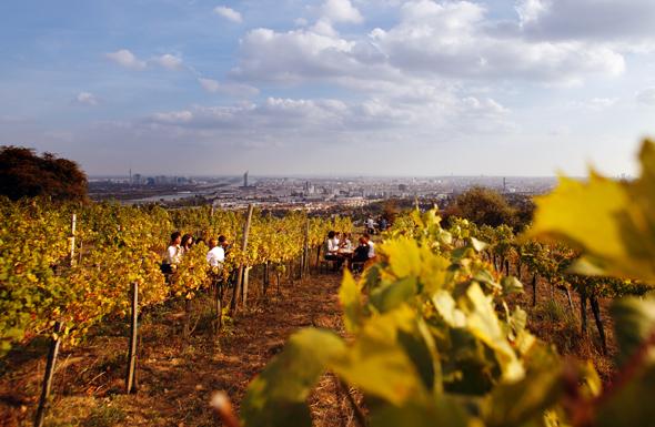 Wien ist die wohl einzige Hauptstadt weltweit mit stattlichem Weinbau innerhalb der Stadtgrenzen. (Foto Peter Rigaud)