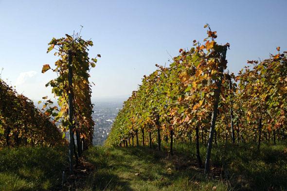 Im Herbst, wenn sich das Laub bunt verfärbt, die Winzer ihre Ernte einholen und Weinfeste zum Feiern einladen, locken Weingegenden zu Entdeckungen. (Foto: djd)