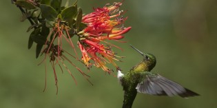 In Ecuador piepts wohl: Vogelbeobachtung in Quito