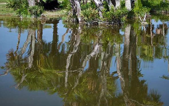 Mit seinen Sumpfpflanzen, Mangroven und Zypressen zieht der Ecerglades National Park die Besucher in seinen Bann. (Foto Florida Tourist Bureau)