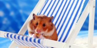 ZZF warnt: Aufgepasst bei tierischen Souvenirs