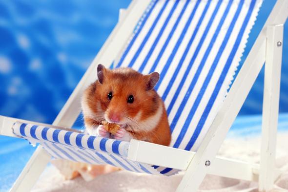 Tiere aus Urlaubsländern sind keine Mitbringsel, warnt der Ulrike Schanz