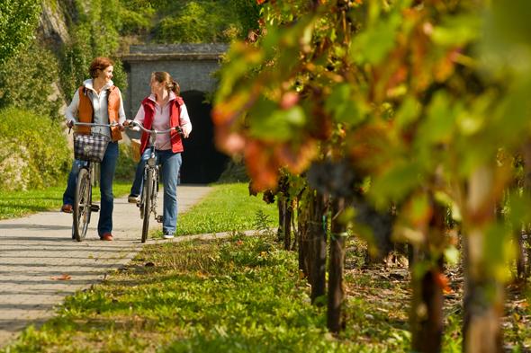 Zwischen der Ahr und Weinbergen führt der neue Abschnitt des Ahr-Radwegs entlang. (Foto RPT)