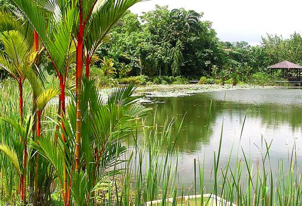 Teil des neuen UNESCO-Welterbes: der Symphony  Lake in den botanischer Gärten von Singapur. (Foto Velela)