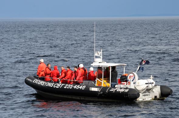 Nicht nur in großen Passagierschiffen, sondern auch in motorisierten Schlauchbooten kann man sich auf dem Lorenz-Strom den Walen nähern. (Foto Karsten-Thilo Raab)