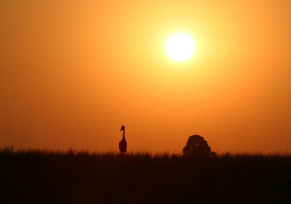 Auf den mehr als 1.000 ausgewiesenen Wanderrouten in Südafrika geht es natürlich bisweilen auch der Sonne entgegen. (Foto South Africa Tourism)
