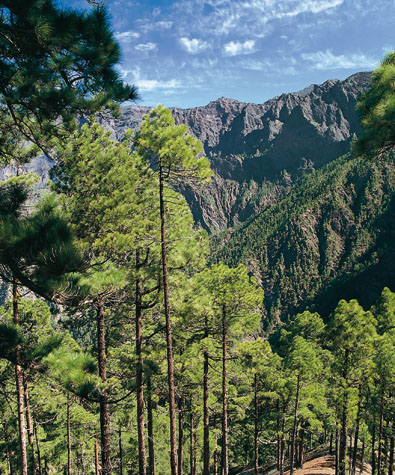 Grüner Traum aug La Palma: der Nationalpark Caldera de Taburiente. (Foto Turespaña)
