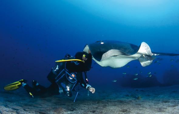Vor der Küste von La Palma finden Taucher eine abwechslungsreiche Unterwasserwelt. (Foto Turespaña)