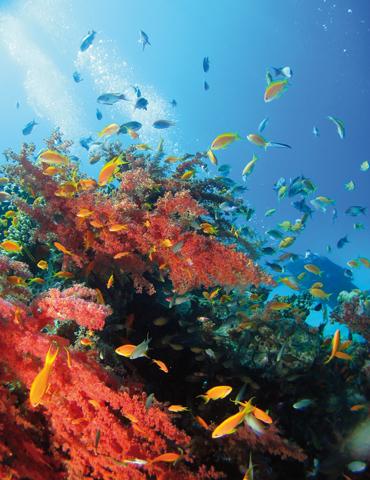 Das Rote Meer ünberrascht vor der Küste von Jordanien mit einem ungeahnten Artenreichtum.
