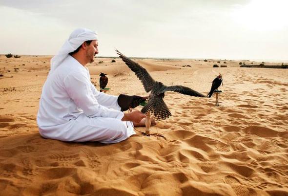 Die Falknerei genießt in Dubai einen großen Stellenwert. (Foto DTCM)