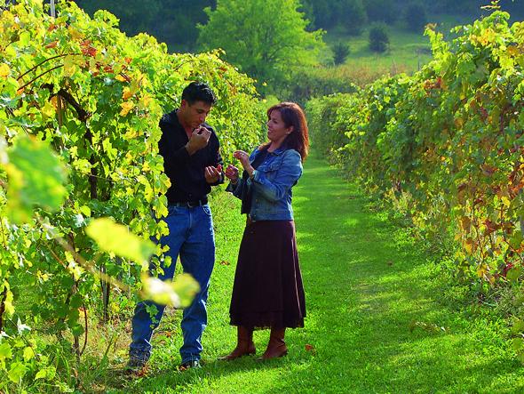 Rund um Galena wird - wie hier auf dem Areal der Galena Cellars Vineyards - Weine kultiviert.