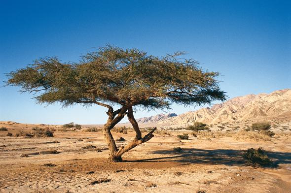 Wie im Wadi Araba weiß Jordanien die Besucher mit seiner Flora udn Fauna in den Bann zu ziehen.