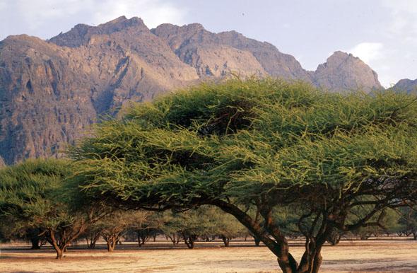 Die beste Reisezeit für das Land auf der arabischen Halbinsel ist zwischen September und April. (Foto: djd)