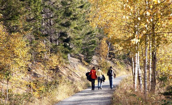 Im herbstlichen Wald finden die Wanderer nicht nur auf dem niedersächsischen Jakobsweg besinnliche Stunden in der Natur. (Foto: djd)