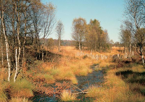 Im Weserbergland führt der Pilgerweg Loccum-Volkenroda durch reizvolle Moorlandschaften.(Foto djd)