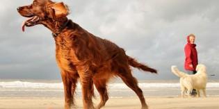 Leinen los für Vierbeiner:Hunde dürfen an vielen Stränden in Holland frei laufen