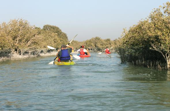 In den Mangrovenwäldern des Emirats tummeln sich auch gerne mal Flamingos.