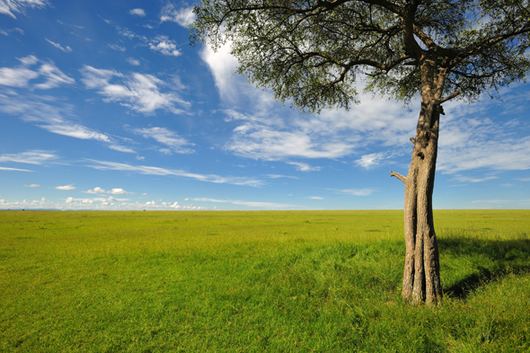 Ungeachtet der Weite des Landes - wie hier in der Masai Mara - kommen Löwen immer auch den menschlichen Behausungen auf dem Lande nahe.