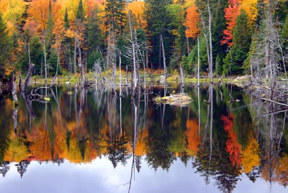 Die Blätter der Bäume im Osten Kanadas zeigen sich während des Indian Summers in den knalligsten Farben. (Foto Karsten-Thilo Raab)